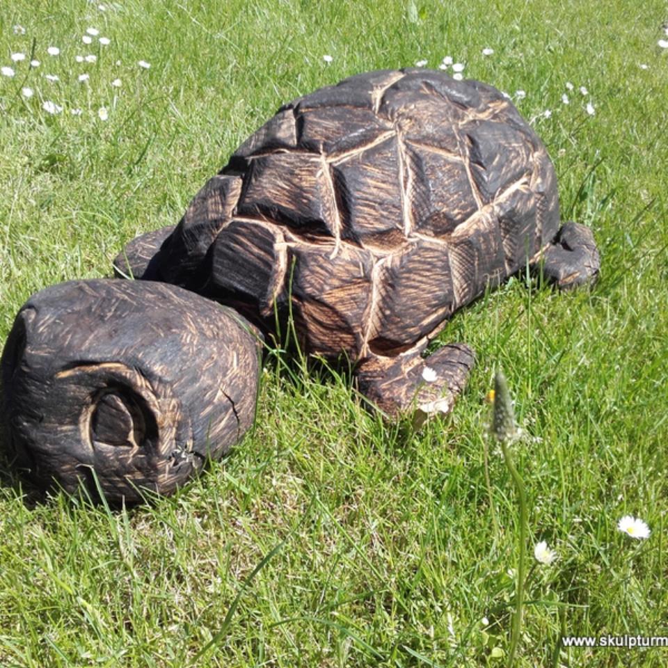 Schildkröte, Eiche
