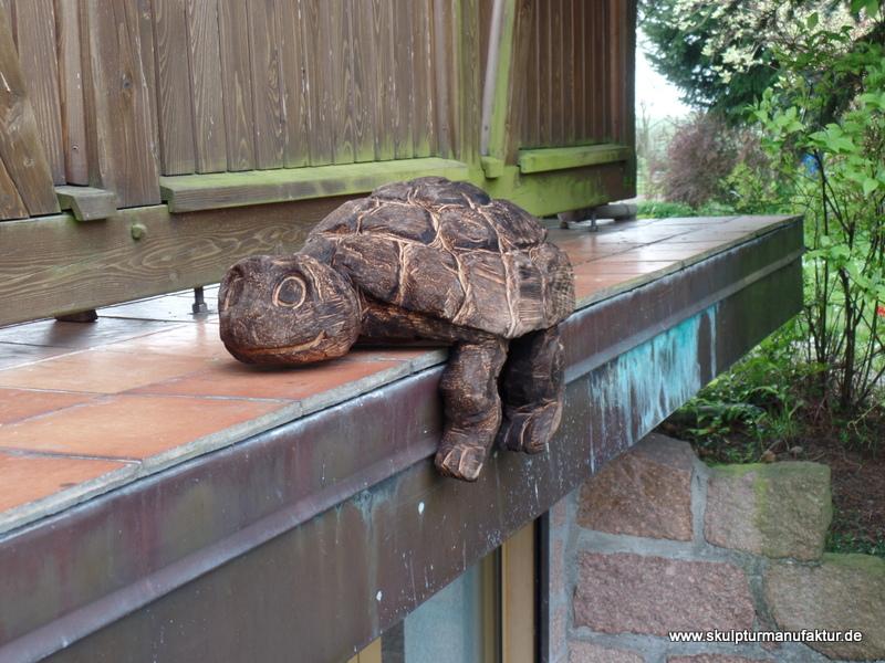 Schildkröte Kantenhocker, Linde